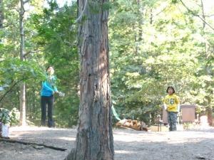TreeBetween2