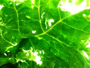 Poem Leaf